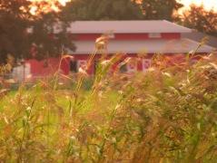 October: Red Barn