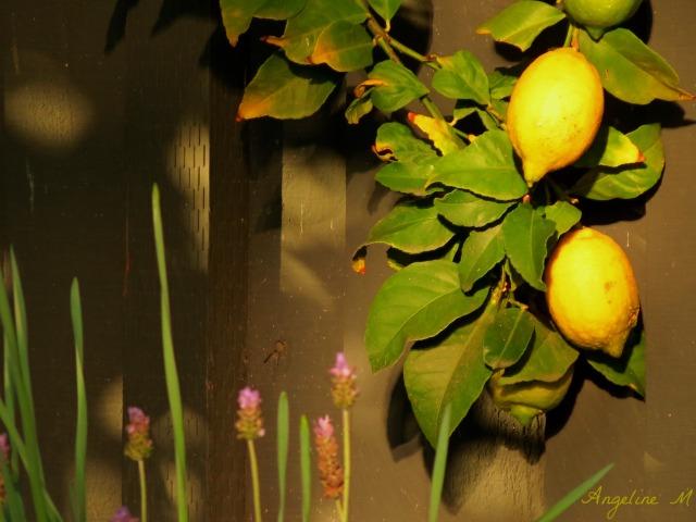 lemonsandlavender