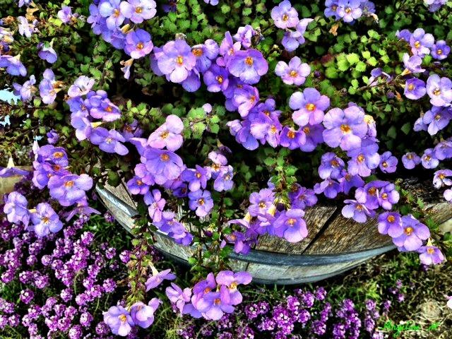 purpletoptobottom