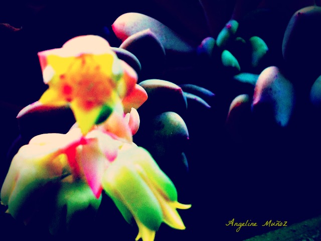succulentflowermacro