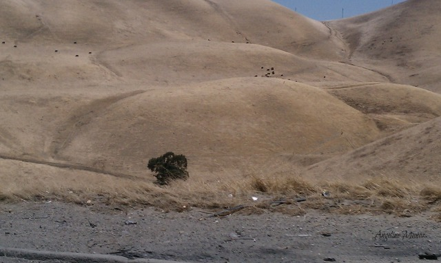 altamonthills