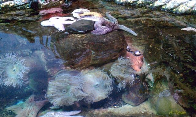 aquariumsf