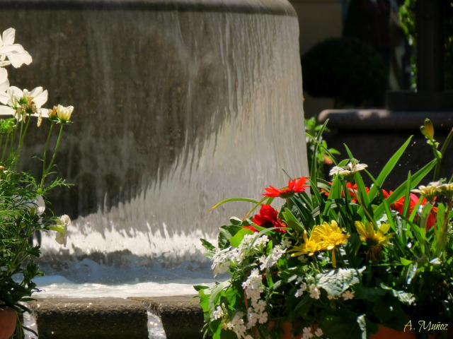 fountainandflowers
