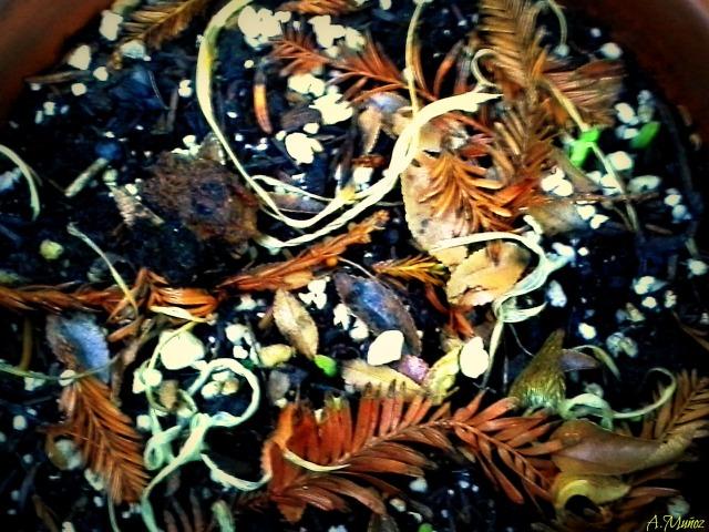 autumndriedflowerpot