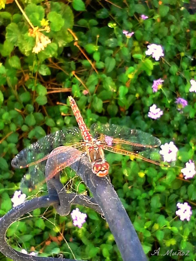 dragonflyonpost