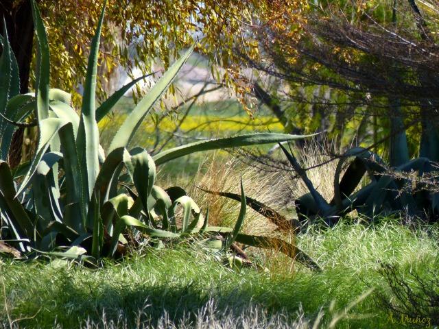 cactusonlammers
