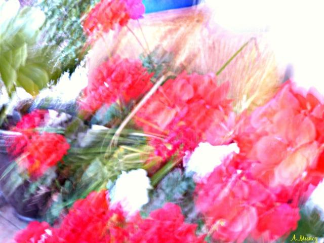 blurredgeranium2