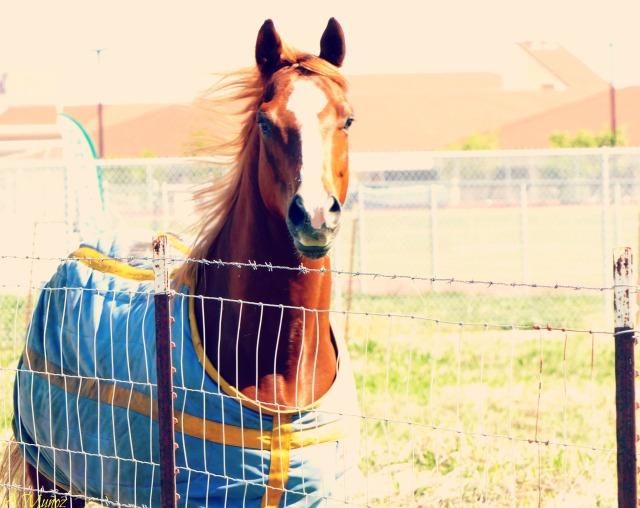 horseatkimble2