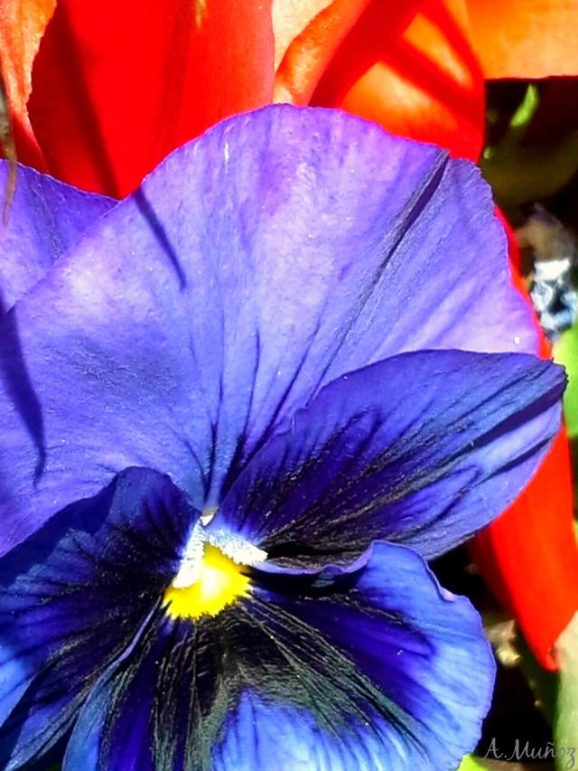 macroflowerpetalspurpleredgreen2