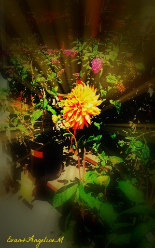 evanflower2