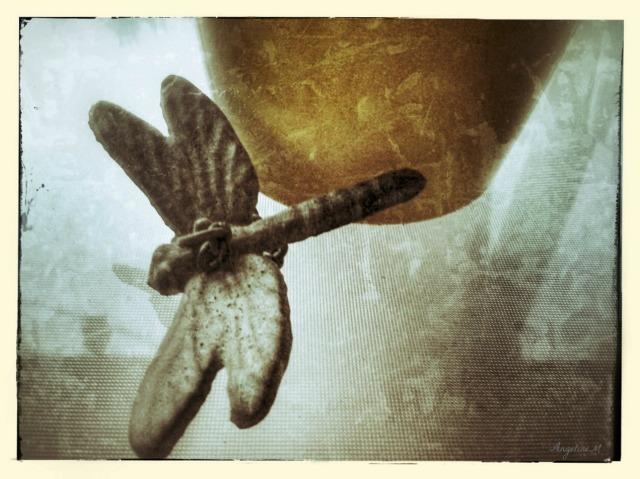 macrodragonfly