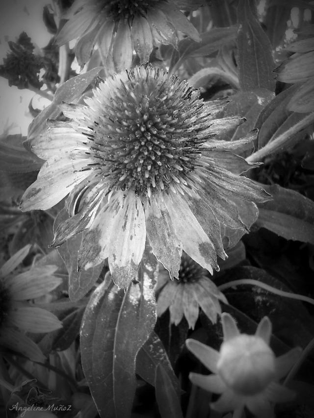 walnutcreekflowers3