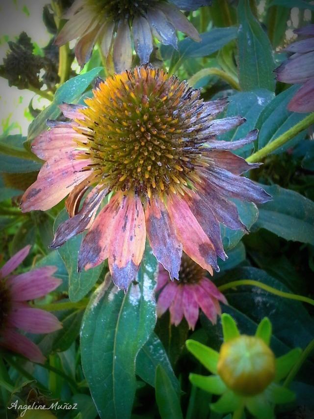 walnutcreekflowers4