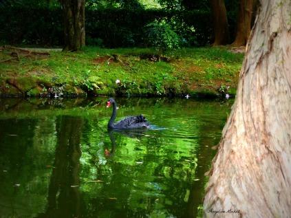 Byodo-In lagoon
