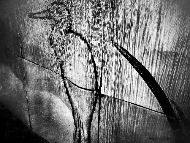 blackandwhiteegretwaterfall3