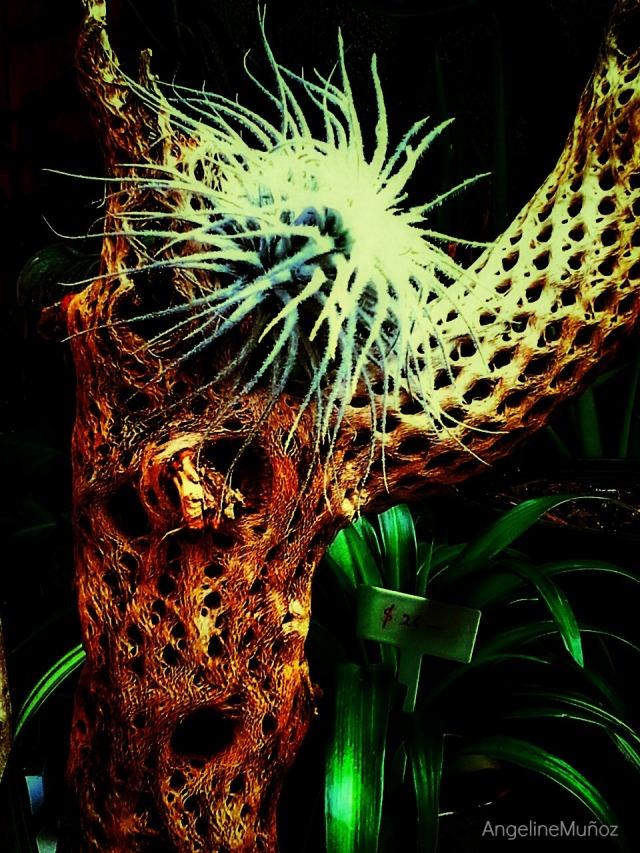 flowershophyattcactussnapseed
