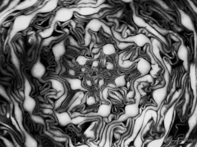macrocabbageblackandwhite