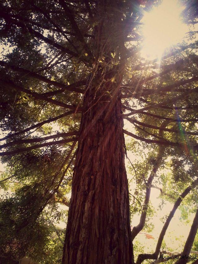 treetopfinal3