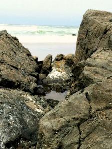beachsonoma