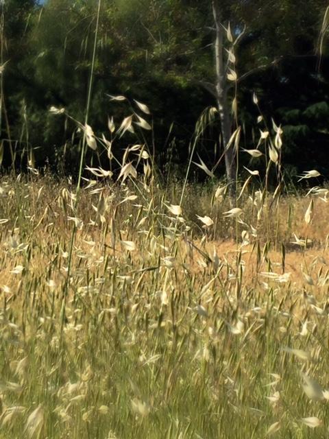 marshcreekweeds