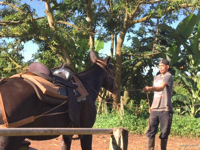 kalaupapa-mule-ride12