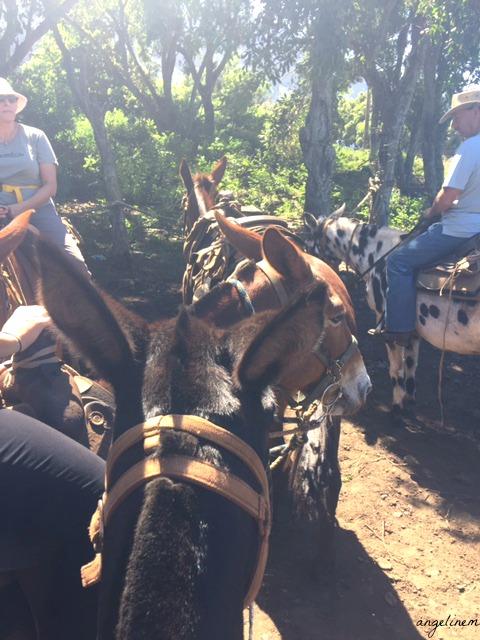 kalaupapa-mule-ride14