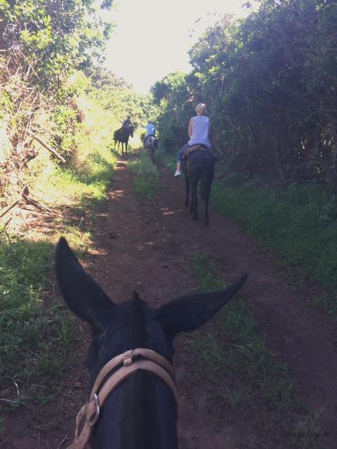 kalaupapa-mule-ride18
