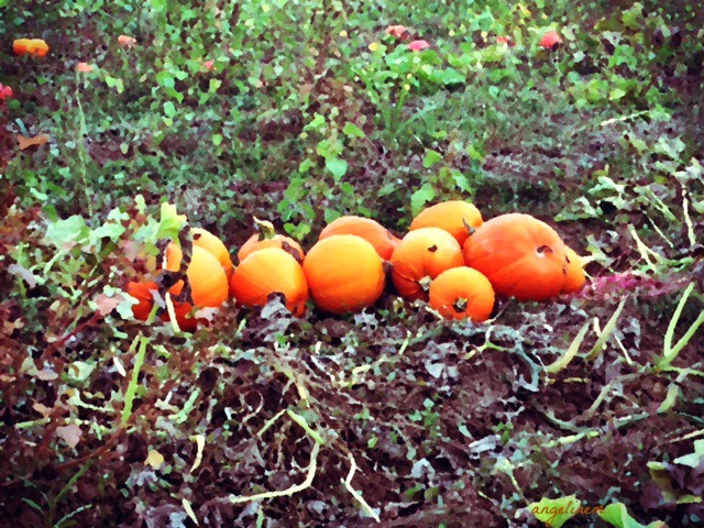 pumpkins20162pictapgo