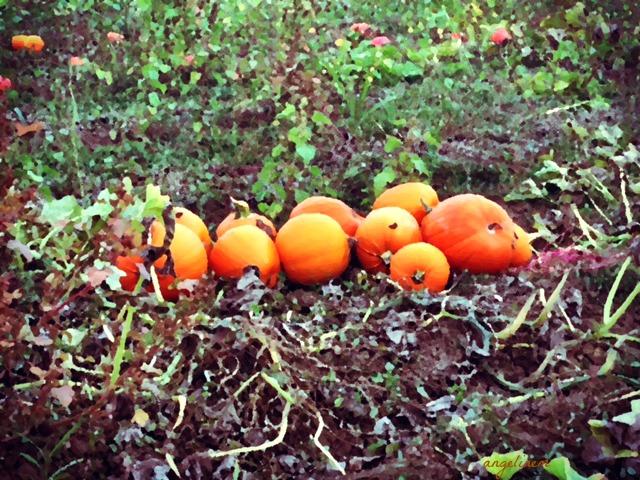 pumpkins20162pictapgo